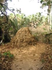 04Bijilo Forest 068