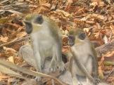 04Bijilo Forest 060