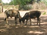 07 Tumani Tenda 086