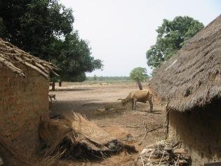 18 Senegal 014