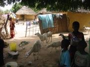 18 Senegal 022