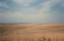 8b Plains