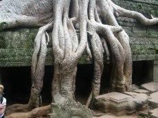 Angkor Roots