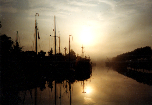 Morning Star (19d)