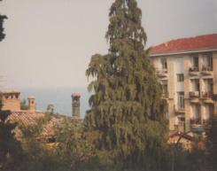 Yugoslavia (17)