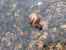 UK Snail