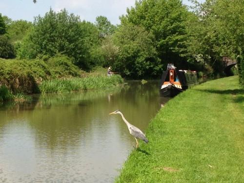 Canal Long Walk (8)