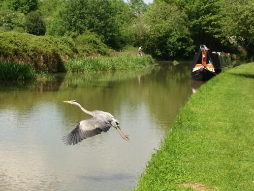 Canal Long Walk (9)