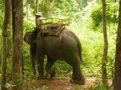 Elephant Trek - Yok Don - Vietnam 7