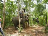 Elephant Trek - Yok Don - Vietnam 6