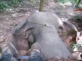 Elephant Trek - Yok Don - Vietnam 5