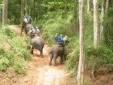 Elephant Trek - Yok Don - Vietnam 3