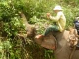Elephant Trek - Yok Don - Vietnam 2