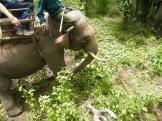 Elephant Trek - Yok Don - Vietnam 1