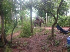 Elephant Trek - Yok Don - Vietnam 9