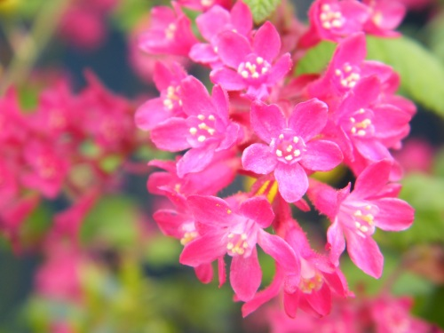 Spring 002