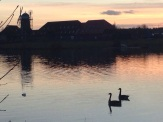 Geese on the Caldecotte at Sunset