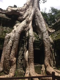 Angkor Wat - Jungle Temple