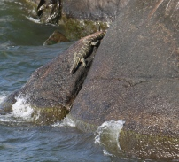 Monitor on the Rocks