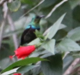 Marico Sun Bird