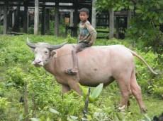 Boy on a Buffalo