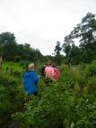 Jungle outskirts