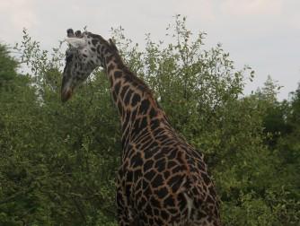 Day 1 Serengeti (191)