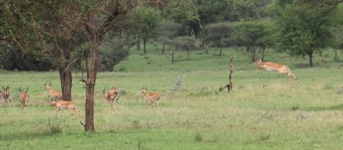 Day 1 Serengeti (297)