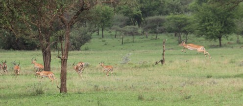 Day 1 Serengeti (297)
