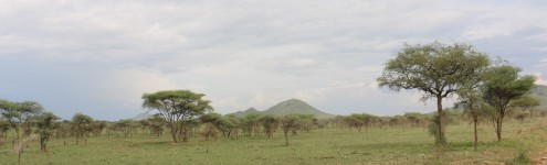 Serengeti Scenery