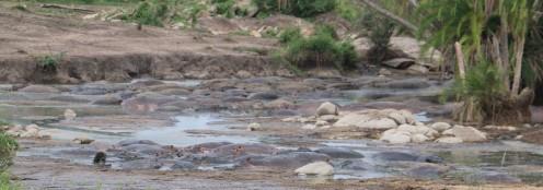 Not Rocks but Hippos