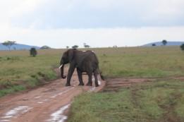 Day 1 Serengeti (452)