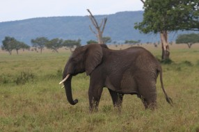 Day 1 Serengeti (453)