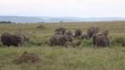 Elephant Troop