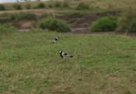 Day 1 Serengeti (540)