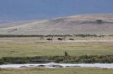 Hippos, Wildebeest and Zebra
