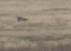 Distant Rhino