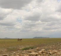 Masai on the plain