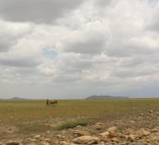 Masai on the plain