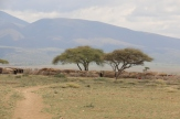 Mt Ngorogoro
