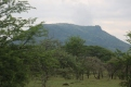 Serengeti Scenery