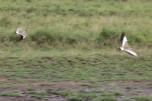 Spectacular Birds in flight