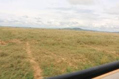 Serengeti Plain