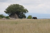 Elephant at Distance