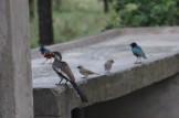 Hornbill, Strarlings and Sparrows