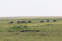 Elephant Plain