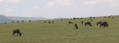 Wildebeest Plain