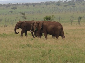 Day 3 Serengeti (419) - Copy