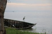 Heron at Lake Victoria