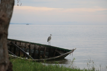 Egret on the boat